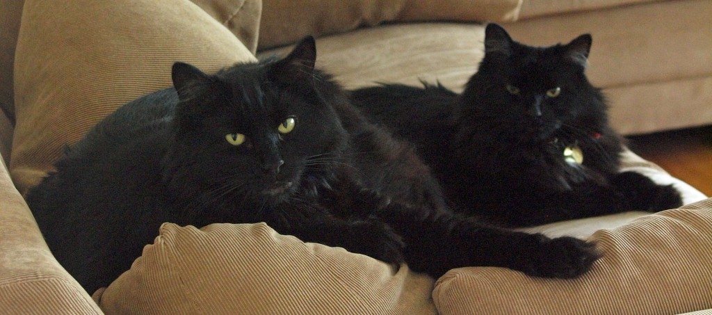 Tartufo and Tiramisu, two black cats